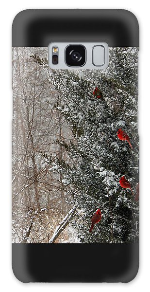 Cardinals In Winter 1 Square Galaxy Case
