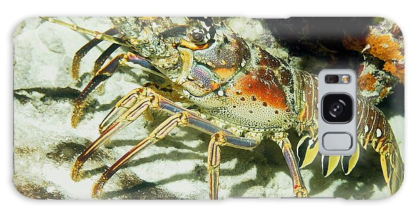 Caribbean Spiny Reef Lobster  Galaxy Case