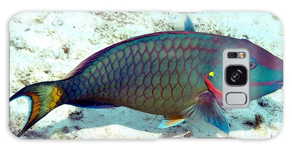 Caribbean Stoplight Parrot Fish In Rainbow Colors Galaxy Case by Amy McDaniel