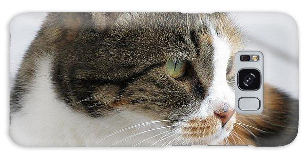 Cat Galaxy Case by Laurel Powell
