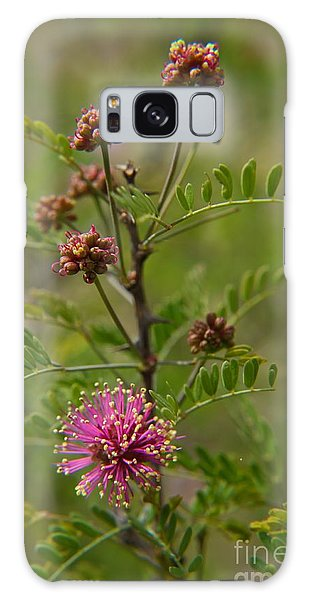 Catclaw  Mimosa Galaxy Case