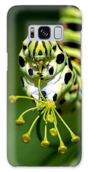 Caterpillar Of The Old World Swallowtail Galaxy Case