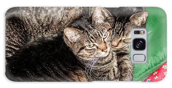 Cats Cuddling Galaxy Case