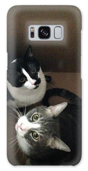 Tabby Cat Kitten Photography Pets  Galaxy Case