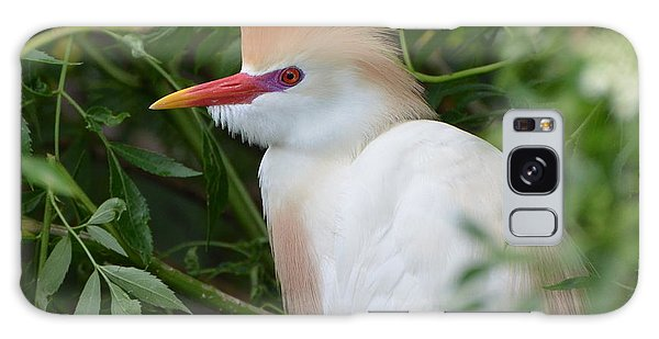 Cattle Egret In Breeding Season Galaxy Case