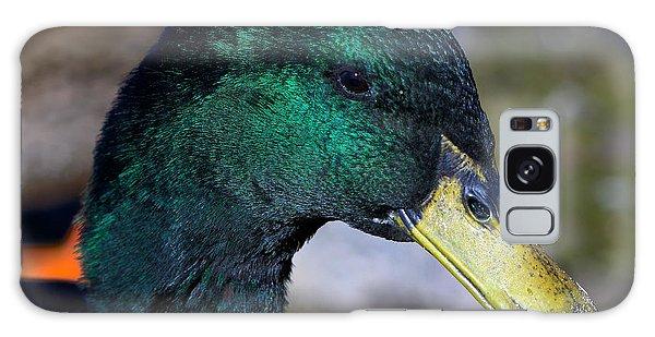 Cayuga Duck  Galaxy Case by Stephen  Johnson