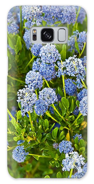 Ceanothus Impressus Santa Barbara Flowering Bush Galaxy Case