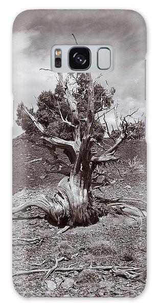 Cedar Landscape Galaxy Case