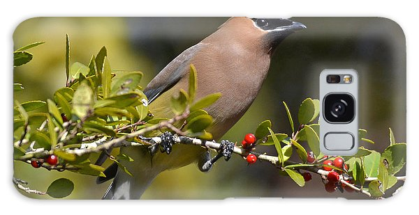 Cedar Waxwing And Red Berries Galaxy Case by Kathy Baccari