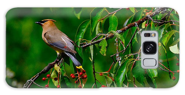 Cedar Waxwing Galaxy Case by Dan Hefle