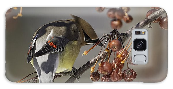 Cedar Waxwing Eating Berries 7 Galaxy Case