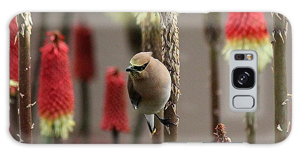 Cedar Waxwing Galaxy Case by Erica Hanel