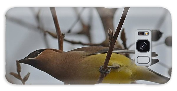 Cedar Waxwing Feasting In Foggy Cherry Tree Galaxy Case by Jeff at JSJ Photography