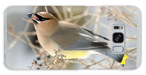 Cedar Waxwing Feeding Galaxy Case