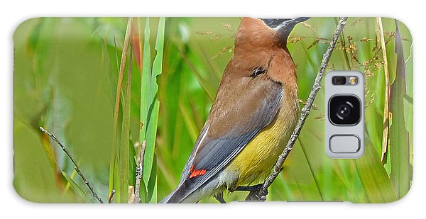 Cedar Waxwing Galaxy Case by Rodney Campbell