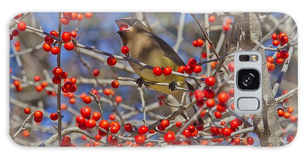 Cedar Waxwing In The Act Of Swallowing A Possumhaw Fruit Galaxy Case