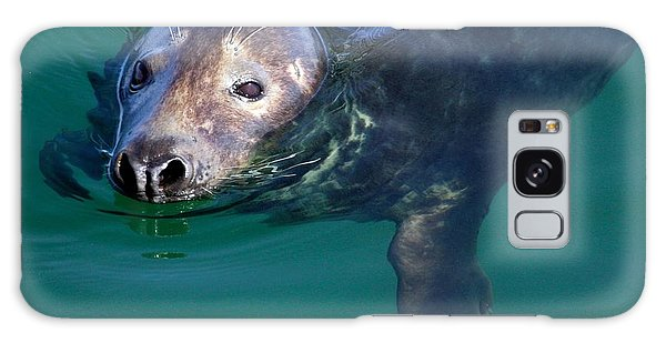Chatham Harbor Seal Galaxy Case