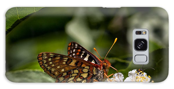 Checkerspot Sipping Nectar Galaxy Case