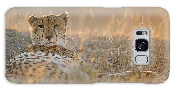 Cheetah Prepares To Sleep Galaxy Case