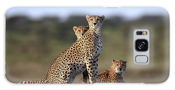 Cheetahs Family Galaxy S8 Case