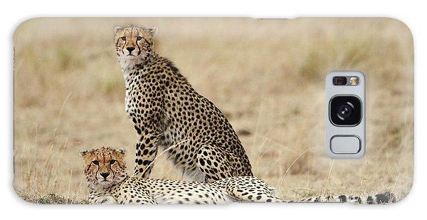 Cheetahs Resting Galaxy Case