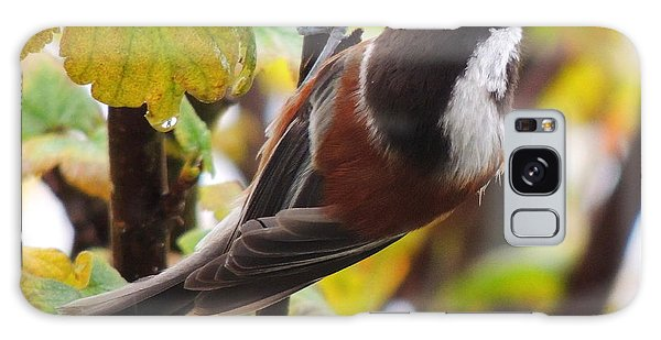 Chestnut-backed Chickadee Galaxy Case by Karen Horn
