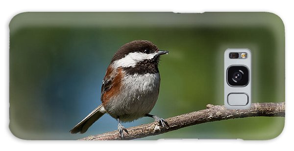 Chestnut Backed Chickadee Perched On A Branch Galaxy Case
