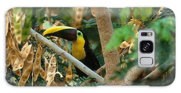 Chestnut-mandibled Toucan Galaxy Case by Art Wolfe