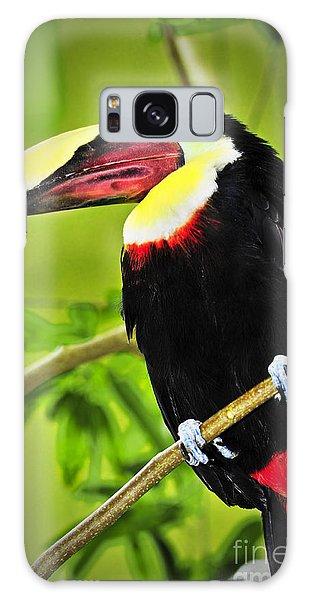 Toucan Galaxy S8 Case - Chestnut Mandibled Toucan by Elena Elisseeva