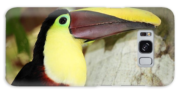 Chestnut Mandibled Toucan Galaxy Case