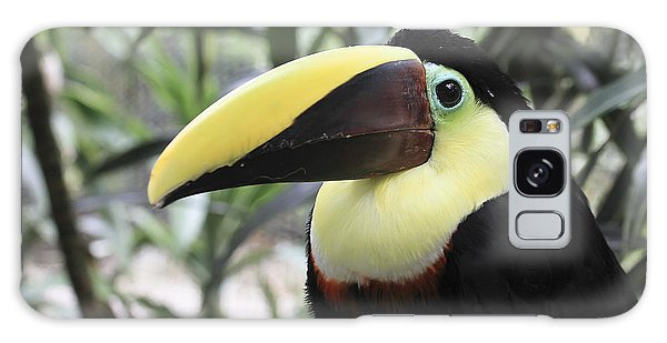 Chestnut-mandibled Toucan Galaxy Case by Teresa Zieba