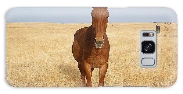 Chestnut Mule In Gold Galaxy Case