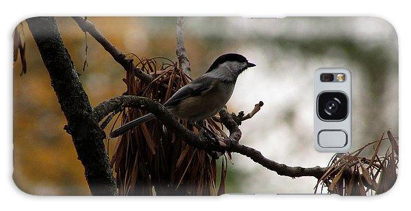 Chickadee In A Tree Galaxy Case