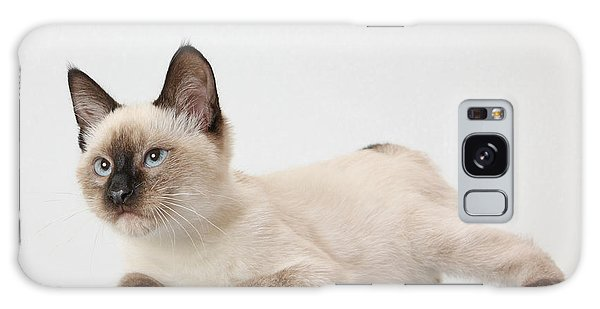 Chocolate Point Siamese Galaxy Case