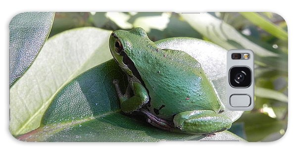 Chorus Frog On A Rhodo Galaxy Case