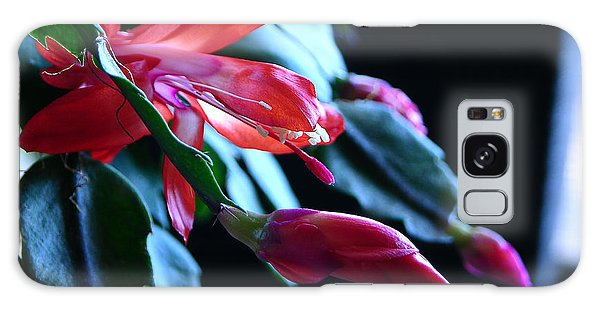 Christmas Cactus In Bloom Galaxy Case