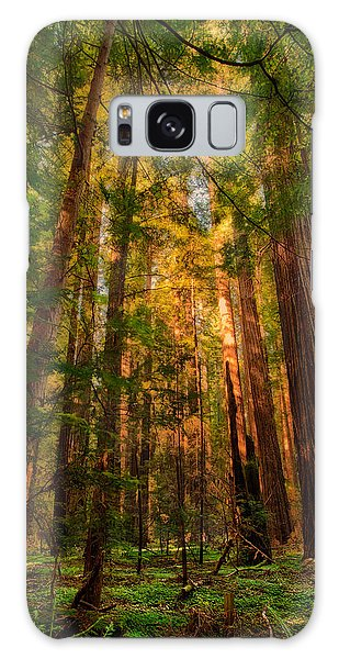 Circle Of Light - California Redwoods Galaxy Case