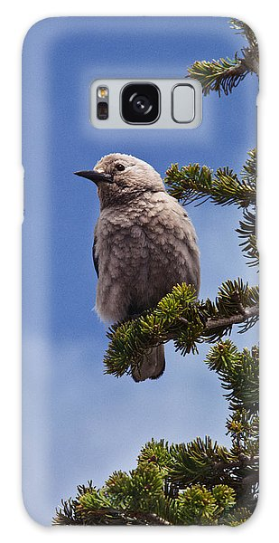 Clark's Nutcracker In A Fir Tree Galaxy Case