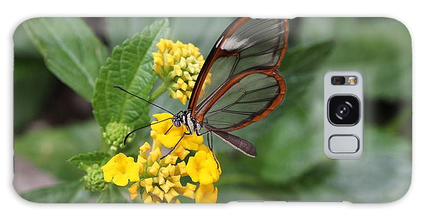 Clearwing Butterfly Galaxy Case