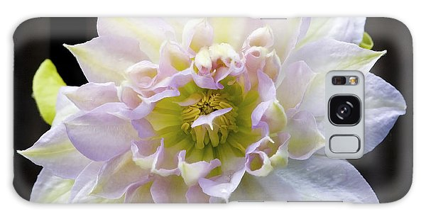 Clematis 'belle Of Woking' Galaxy Case
