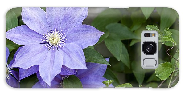 Galaxy Case - Purple Clematis by Patty Colabuono