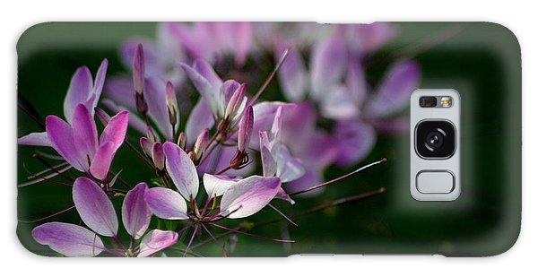 Cleome Galaxy Case by Living Color Photography Lorraine Lynch