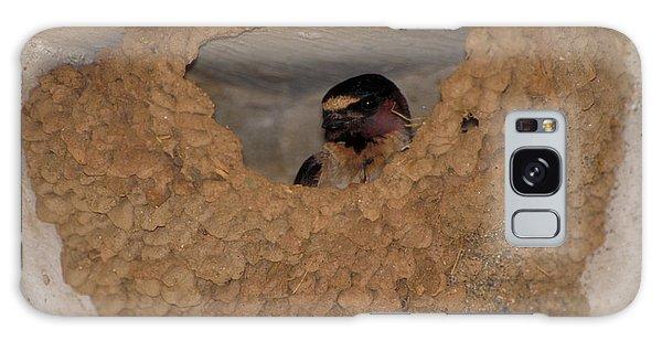Cliff Swallows Galaxy Case by Paul J. Fusco