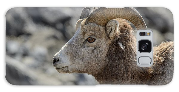 Close Big Horn Sheep  Galaxy Case