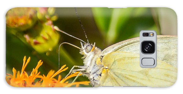 Butterfly Attracted To Mexican Flame Galaxy Case by Debra Martz