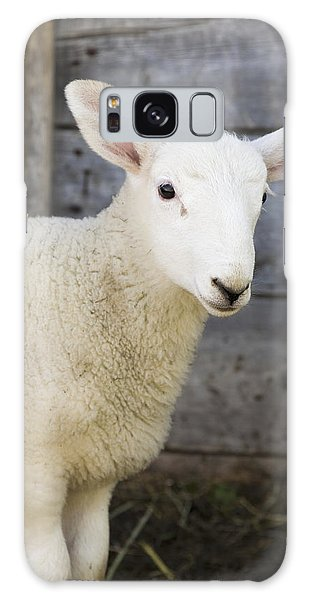 Sheep Galaxy S8 Case - Close Up Of A Baby Lamb by Michael Interisano