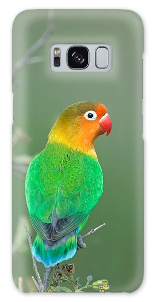 Lovebird Galaxy S8 Case - Close-up Of A Fischers Lovebird by Panoramic Images