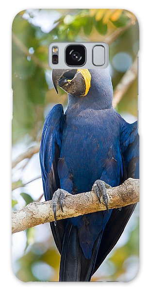 Macaw Galaxy Case - Close-up Of A Hyacinth Macaw by Panoramic Images