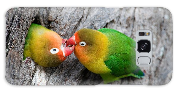 Lovebird Galaxy S8 Case - Close-up Of A Pair Of Lovebirds, Ndutu by Panoramic Images