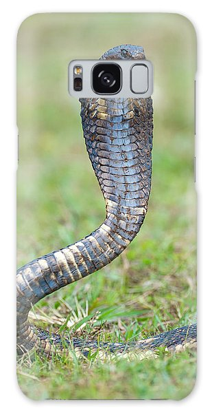 Grass Snake Galaxy Case - Close-up Of An Egyptian Cobra Heloderma by Panoramic Images